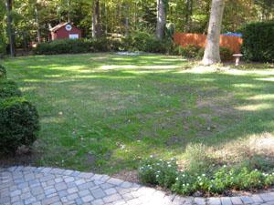 Backyard Update: Growing Some Green Grass