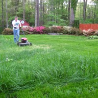 How To Grow Lush Grass (Overseeding & Starter Fertilizer)