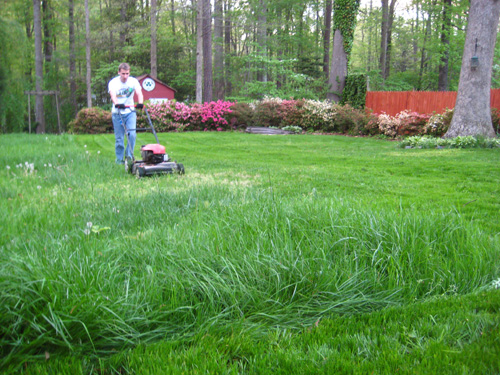 How To Grow Lush Grass (Overseeding & Starter Fertilizer)