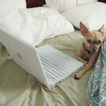 chihuahua-mascot-bloggin-do