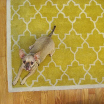Six Rug Rules To Help You Choose The Right One