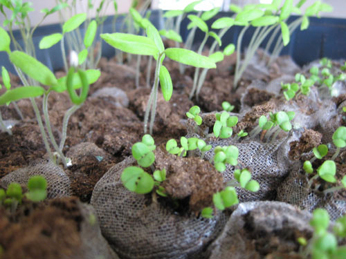 How To Grow Herbs, Vegetables, And Flowers From Seeds