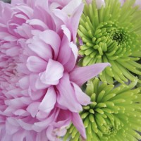 Budget Blooms: The March Mix