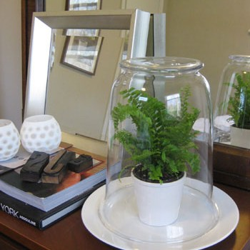The Easiest Glass Terrarium You'll Ever Make