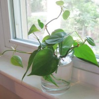 How To Grow Free Plants From Clippings