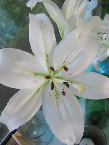 Budget Blooms: Lily Lovin'