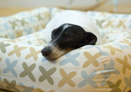 Fab Freebie: Doggone To Sleep