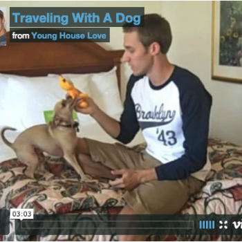 Tips For Traveling With A Dog (Hotels, Flying, & More)