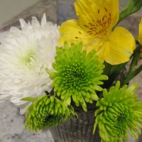 Budget Blooms: Starting The Year Off Right