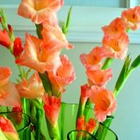 Budget Blooms: Pink Lovelies (A Little Late)