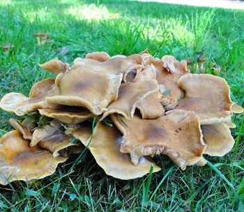 Mushroom-Grossness