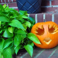 Baby's First Halloween – A Little Handprint Pumpkin