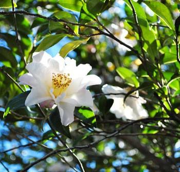 Sprung-Tree-Blossom