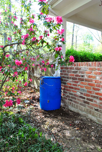 Buying & Installing A Rain Barrel For Earth Day