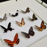 Making Faux Butterfly Art (And Checking Out Foamhenge)