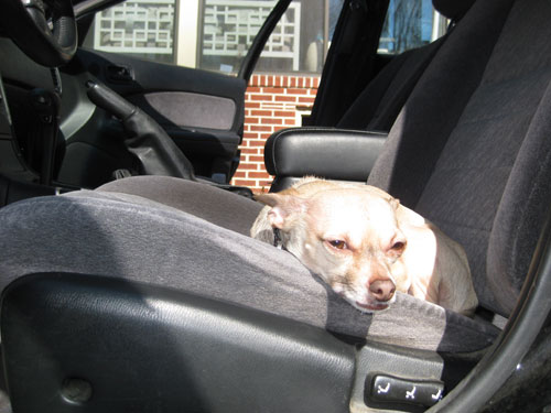 sunday-driver2