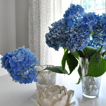 hydrangeas-curtains