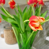 Budget Blooms: Tiptoeing Through The Tulips