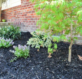 Planting Progress: Bushes, Flowers, & A Dwarf Maple