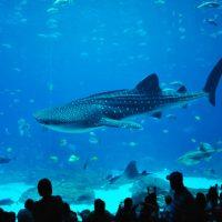Exploring The Georgia Aquarium