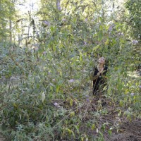 Bushwhacking: Part 1