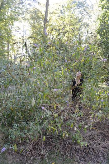 Bushwhacking: Part 1
