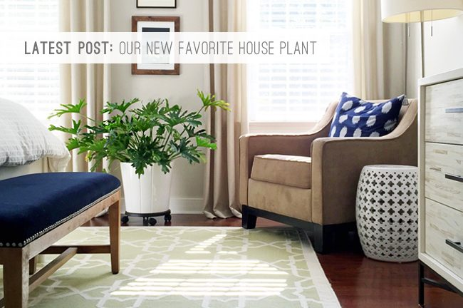 9 Latest Post: Our New Favorite House Plant