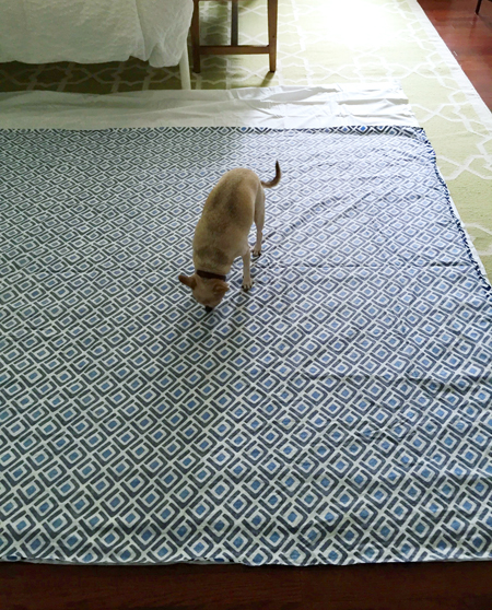 Split-Duvet-Laid-On-Ground-Chihuahua-Inspecting