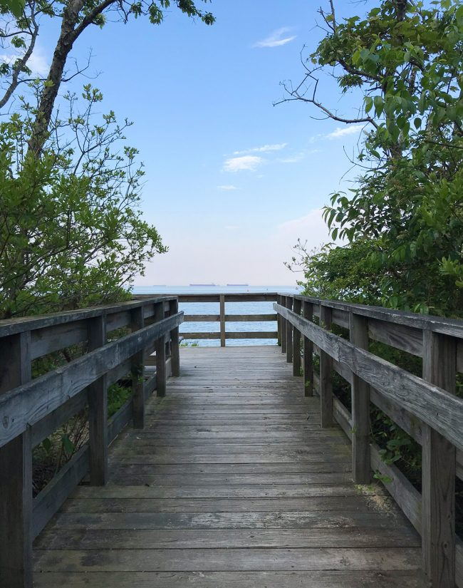 boardwalk hike in cape charles natural preserve area