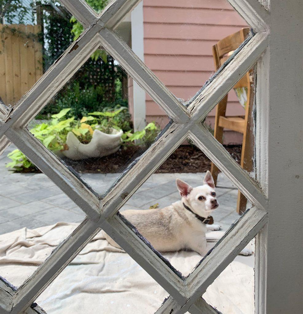 Portrait Of Chihuahua Through Diamond Glass Window