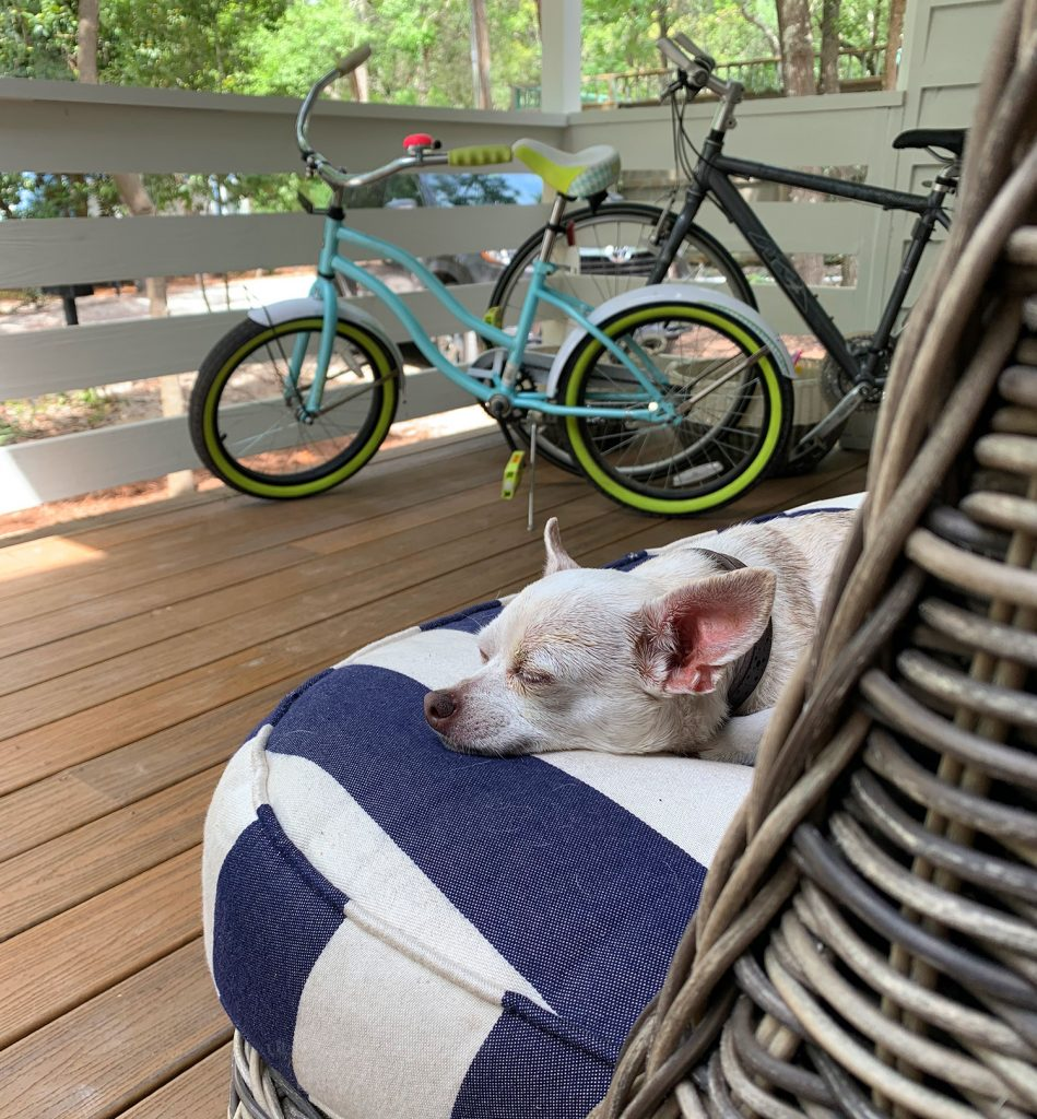 Chihuahua sleeping on outdoor cushion on porch
