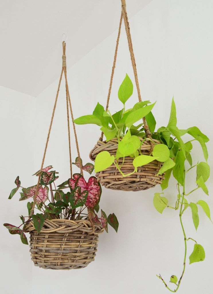 Two Plants In Woven Baskets Hanging From Ceiling