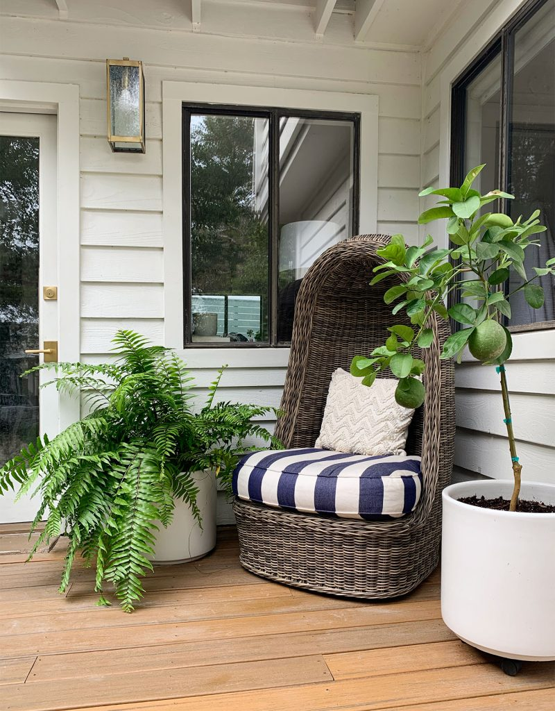 Woven Egg Chair With Large Fern And Potted Lemon Tree