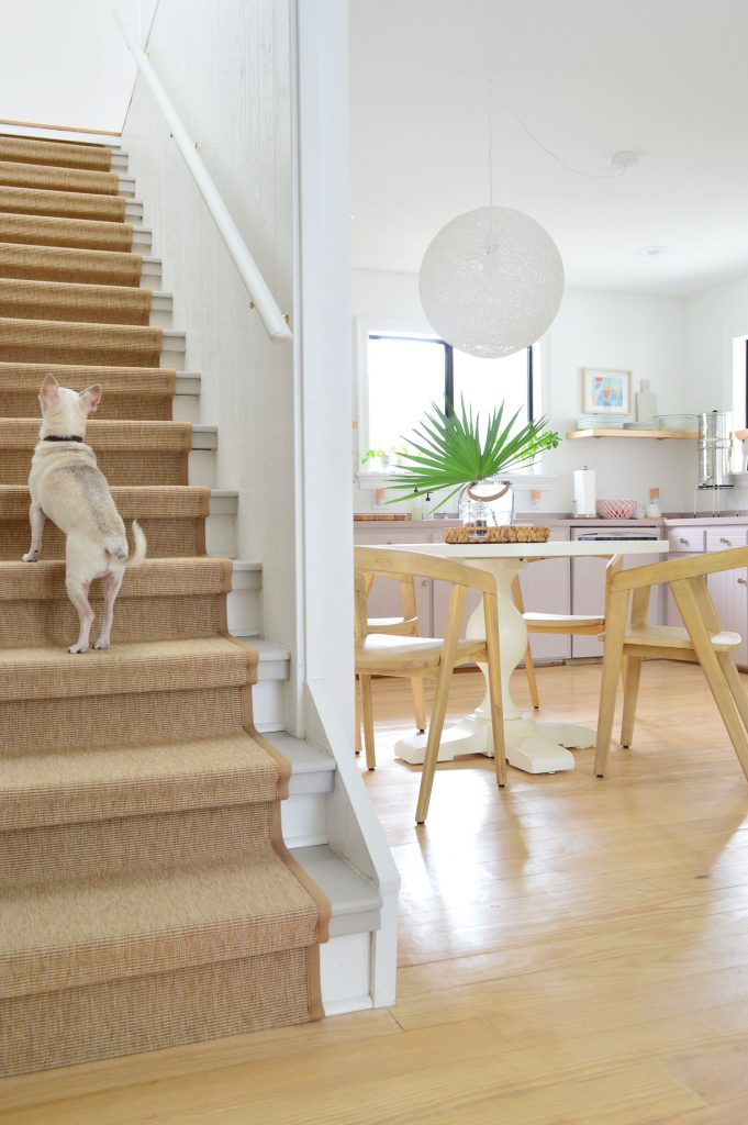 Chihuahua Walking Up Sisal Stair Runner With Kitchen In Background