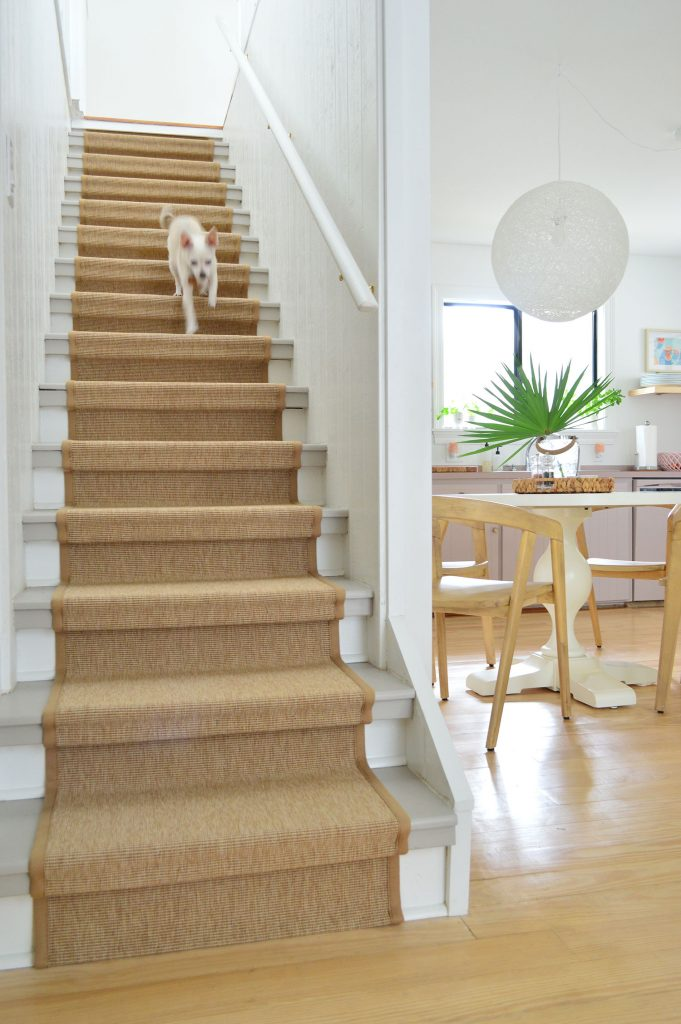 Chihuahua Dog Running Down Staircase With Sisal Runner