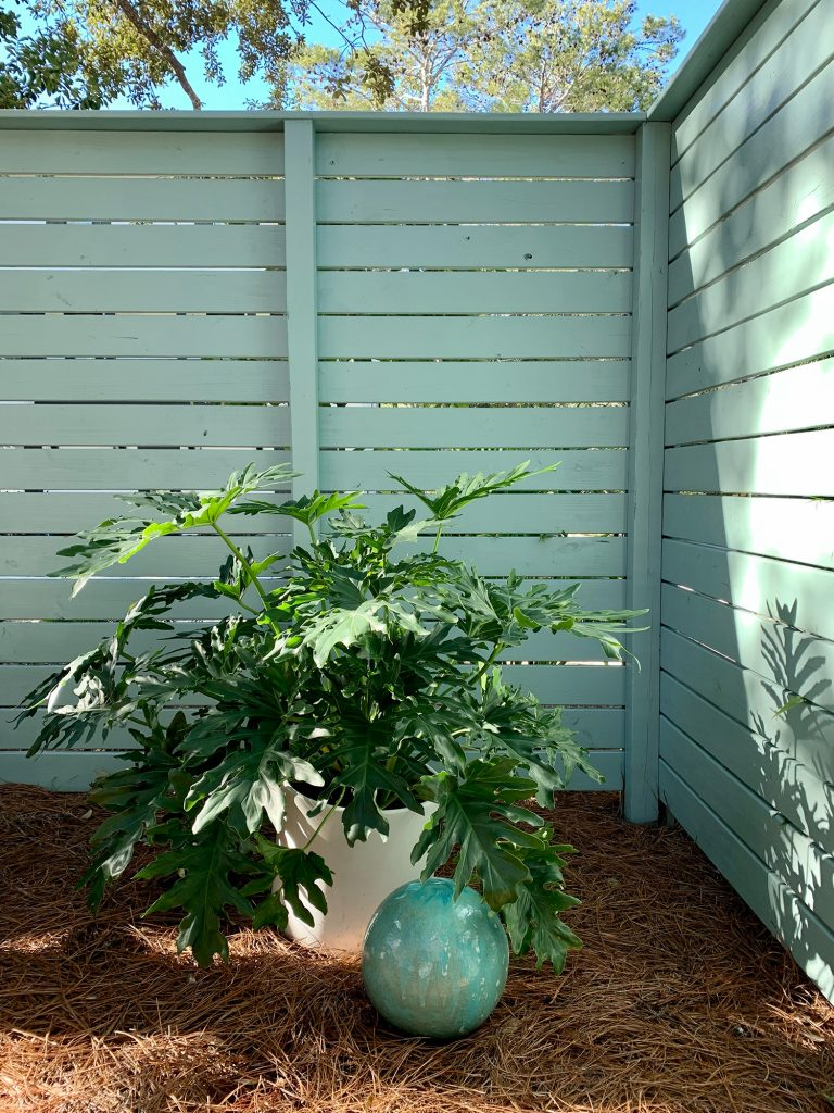 Large potted plant in the corner of side yard fence along with patina green gazing ball