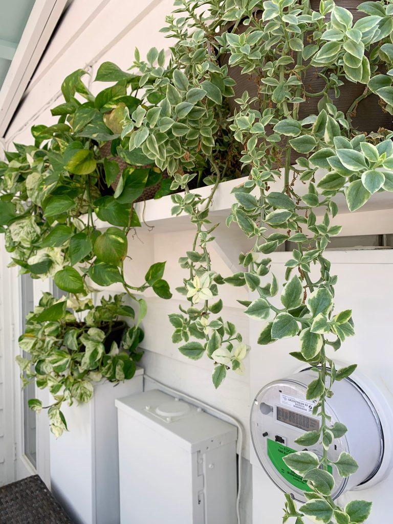plant shelves on porch