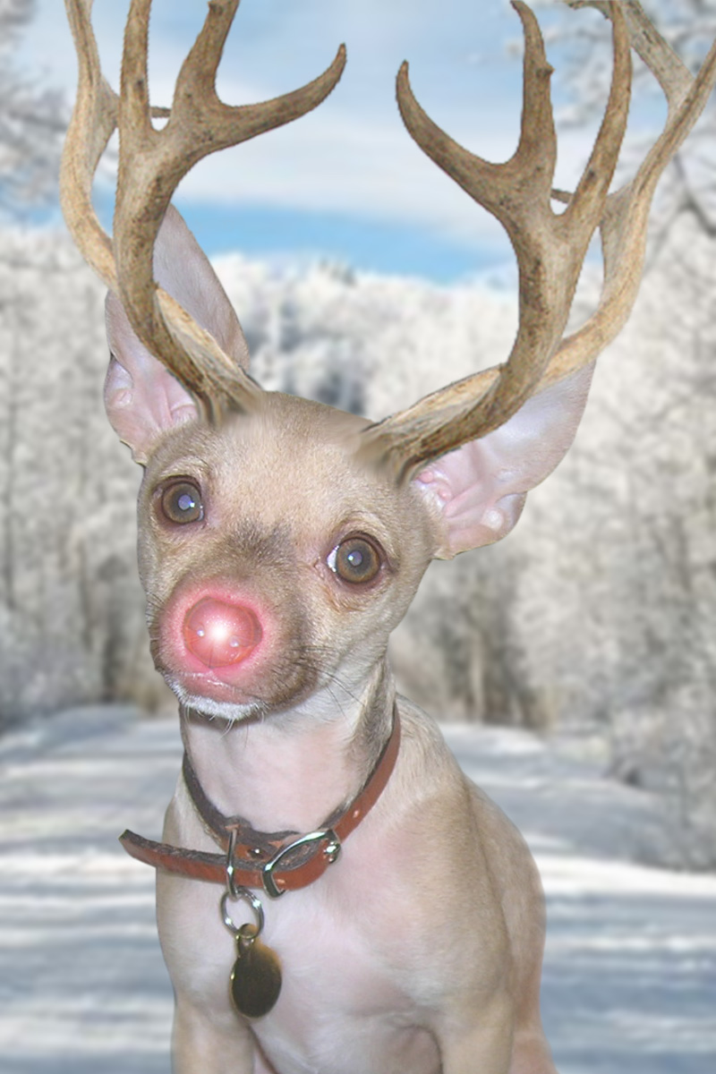 Rudolph The Red Nosed Reindeer Christmas Cards