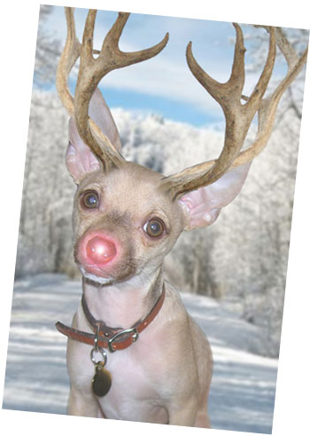 christmasrudolph-burger-holiday-card-copy