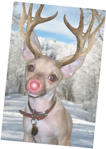 christmasrudolph-burger-holiday-card-copy