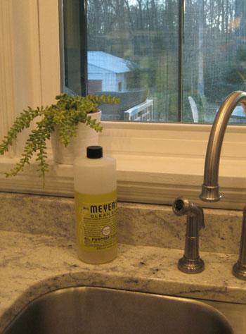 burro-tail-succulent-house-plant