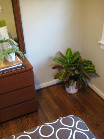 fire-plant-in-the-corner