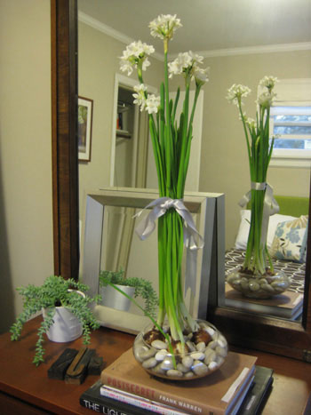 how to keep cut daffodils alive indoors