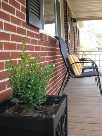 boxwood-black-square-planter-diy-project