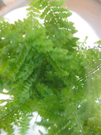 fern-from-above-terrarium