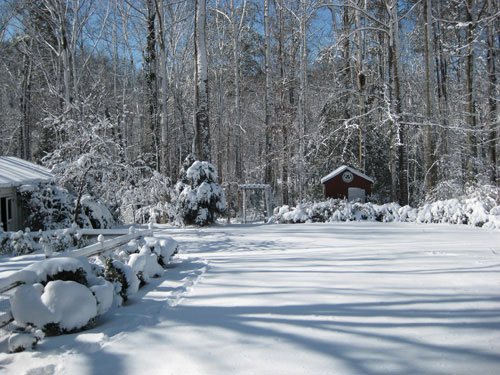 gorgeous-snow-picture-backyard-1
