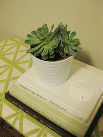 chic-indoor-plants-succulent