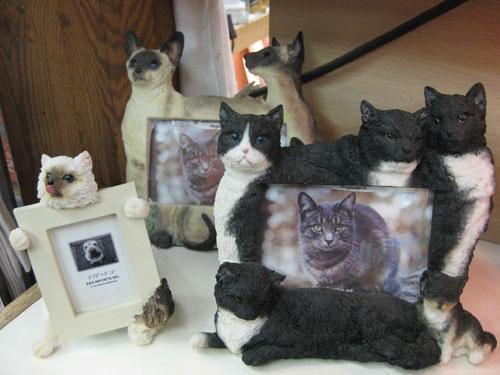 gag-cat-gift-frame
